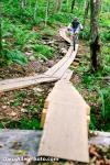 DanaAllenPhoto - Kimmers Trail-1